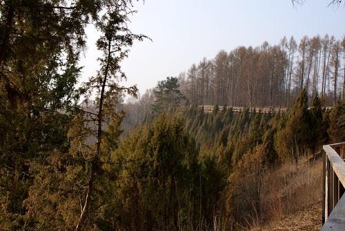 Kadagių slėnis (Botanical reserve)