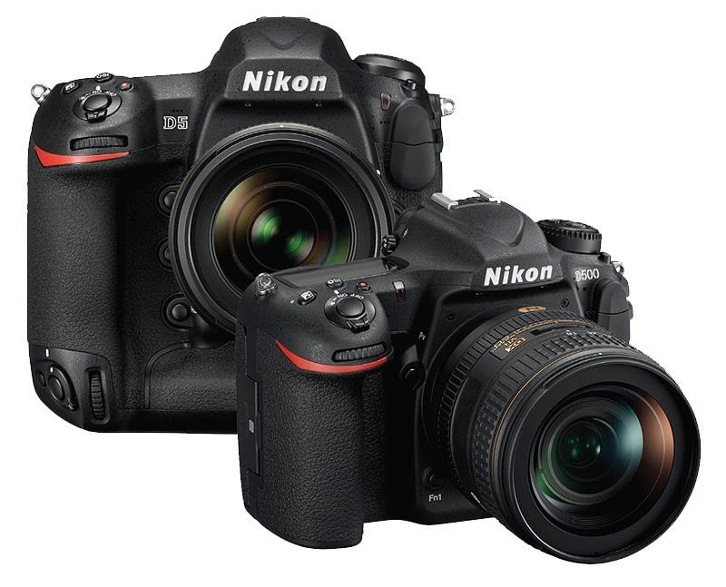Top DSLR Cameras for Wildlife Photography - Outdoor ...