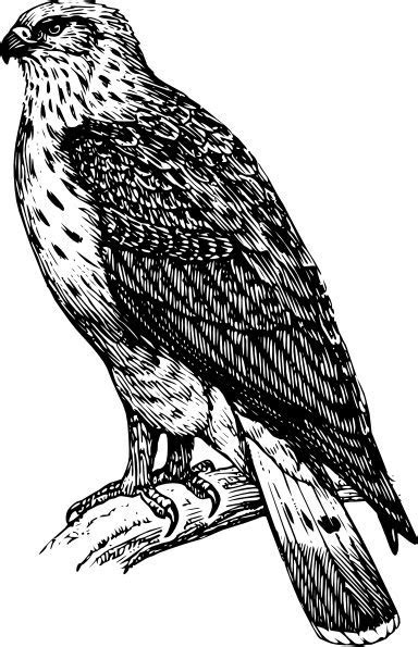 Buzzard Raptor clip art Free vector in Open office drawing