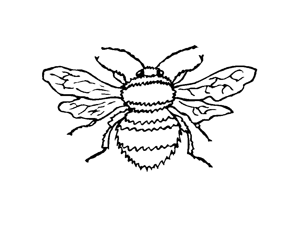 insect_05