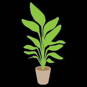 観葉植物の無料素材2 花植物イラスト Flode Illustration フロデ