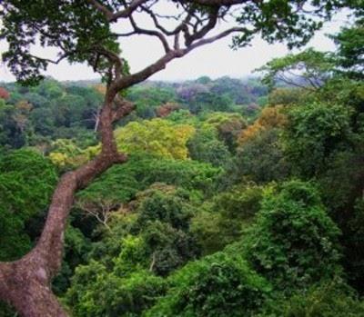 Absorção de CO2 pelas florestas seria menor com aumento das temperaturas