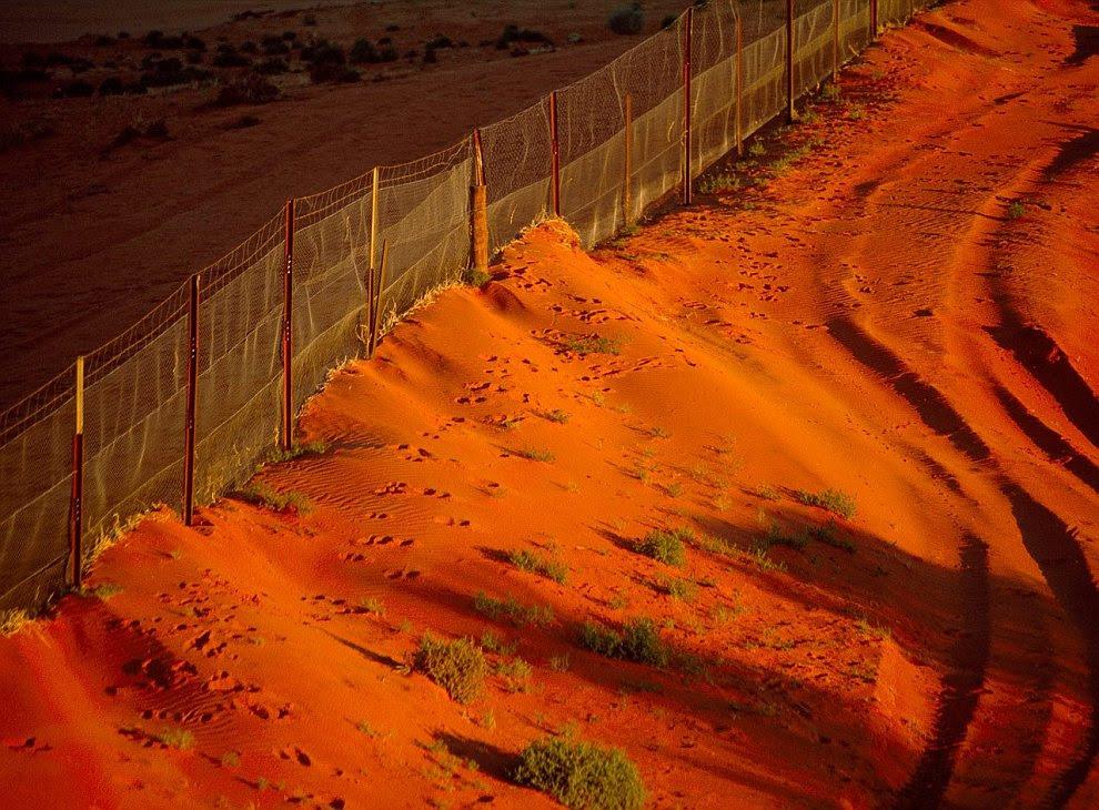 Забор против Динго