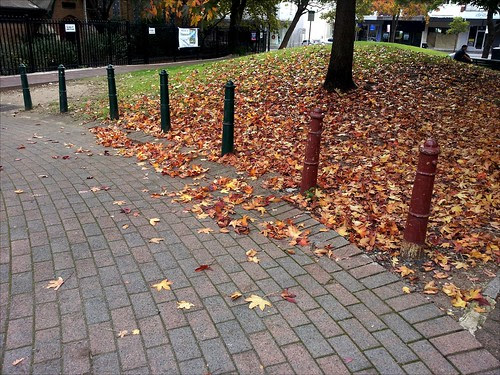 autumn turn