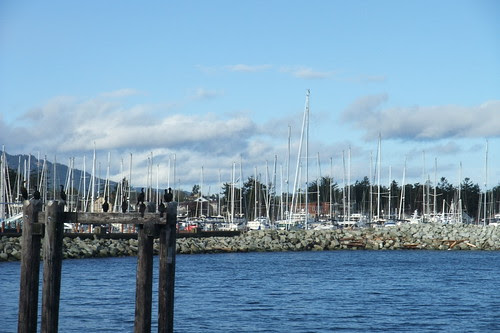 boats in Sidney