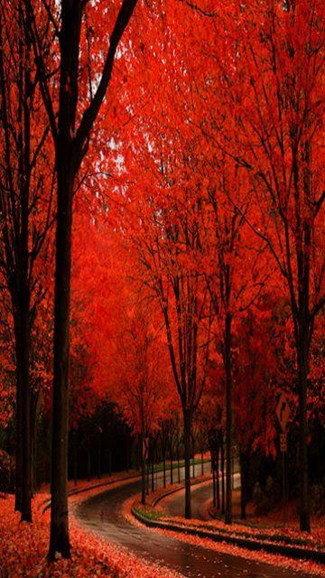 Outono Vermelho ...