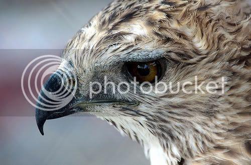 65 Gambar Wayang Garuda Sempati