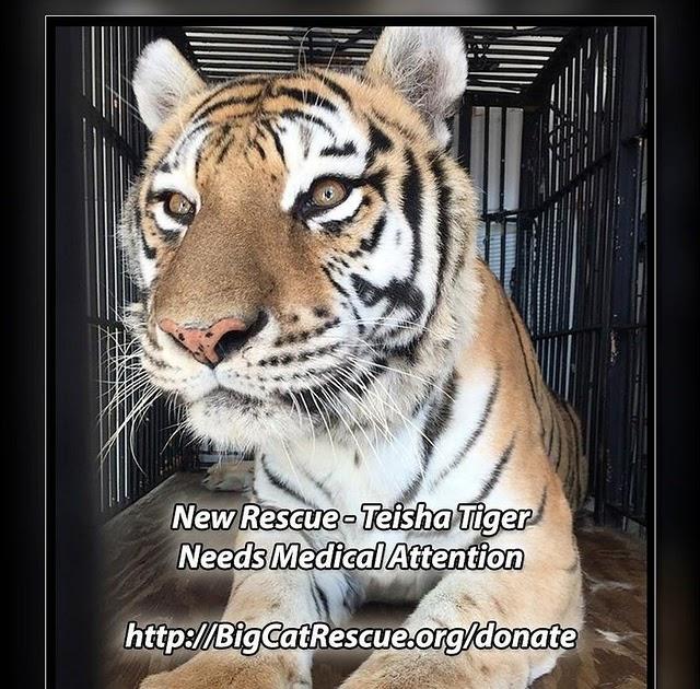 Cat Rescue Marion Ohio