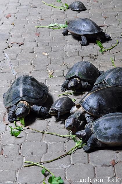 Tortoise at Perak Tong Cave Temple