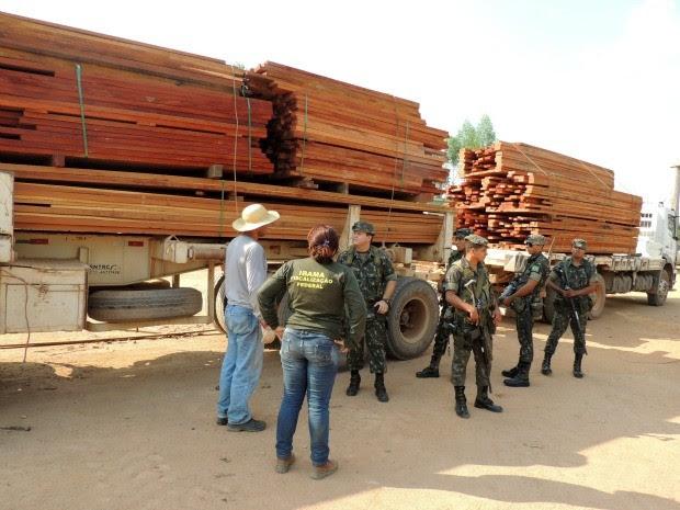 Durante Operação Hileia Pátria, mais de 5 mil metros cúbicos de madeira foram apreendidos em Rondônia (Foto: Divulgação/Ibama)