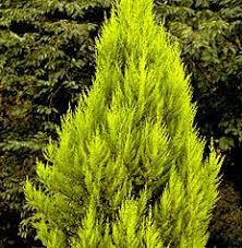 http://t0.gstatic.com/images?q=tbn:-TXABHcKyhWFLM:http://www.dimitra2000.gr/sp/ekali/images/gold_crest1.jpg