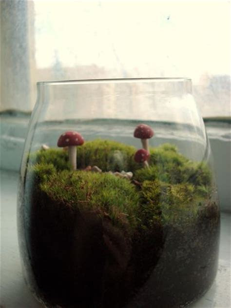 How to Make a Budget Terrarium » Dollar Store Crafts