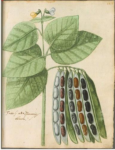 Hortulus Monheimensis 00257