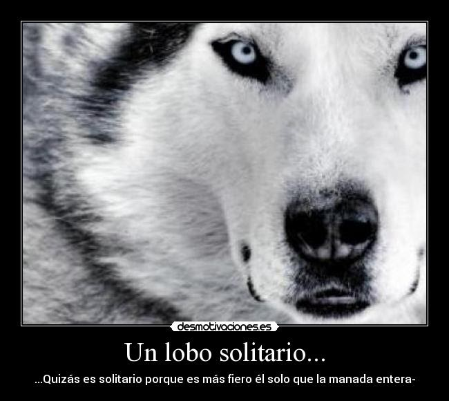 E Videncia Lobo Solitario Off Topic