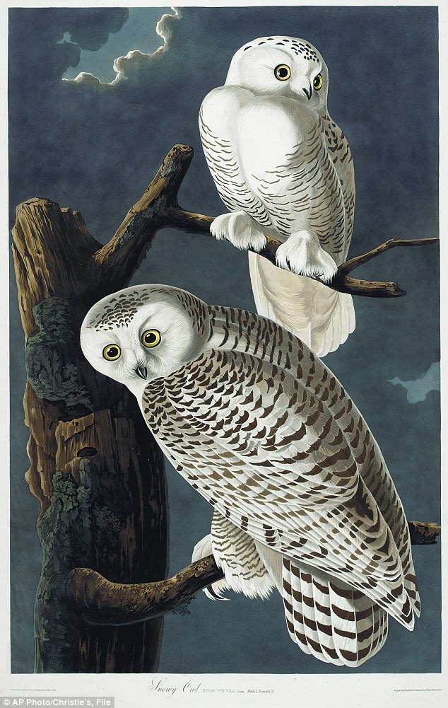 Original masterpieces: Considered a masterpiece of  ornithology art, the four-volume set contains more than 400 engraved hand-colored plates of all the North American species known to Audubon in the early 19th century