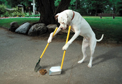 http://tailsmagazines.files.wordpress.com/2009/03/doggie-pooper-scooper.jpg
