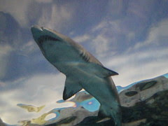 shark overhead