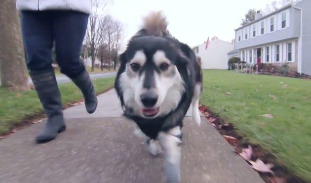 Este perro vuelve a correr gracias a la impresión en 3D