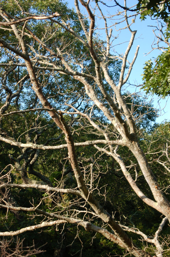 well-lit-trees-copy.jpg