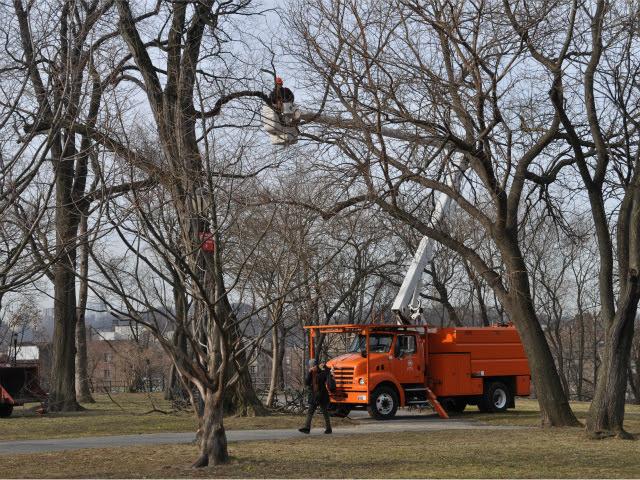 Isham Park trees cut
