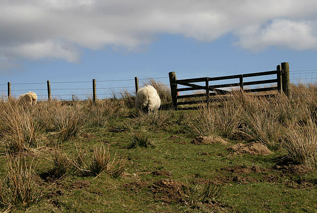 File:A rough grazing field at Abbey Knowe - geograph.org.uk - 1229432.jpg