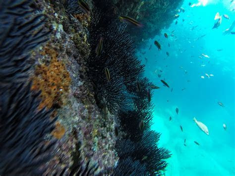 Snorkeling with sea lions in La Paz, Mexico   A Day To