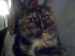 Kiisu Cat