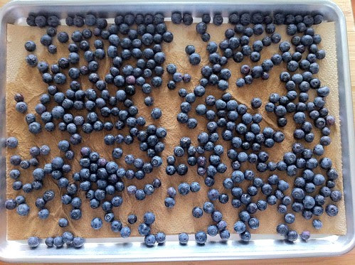 Rinsed Blueberries Drying on Paper Towels