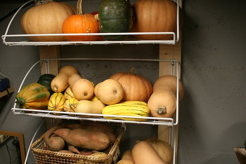 squash shelves 2