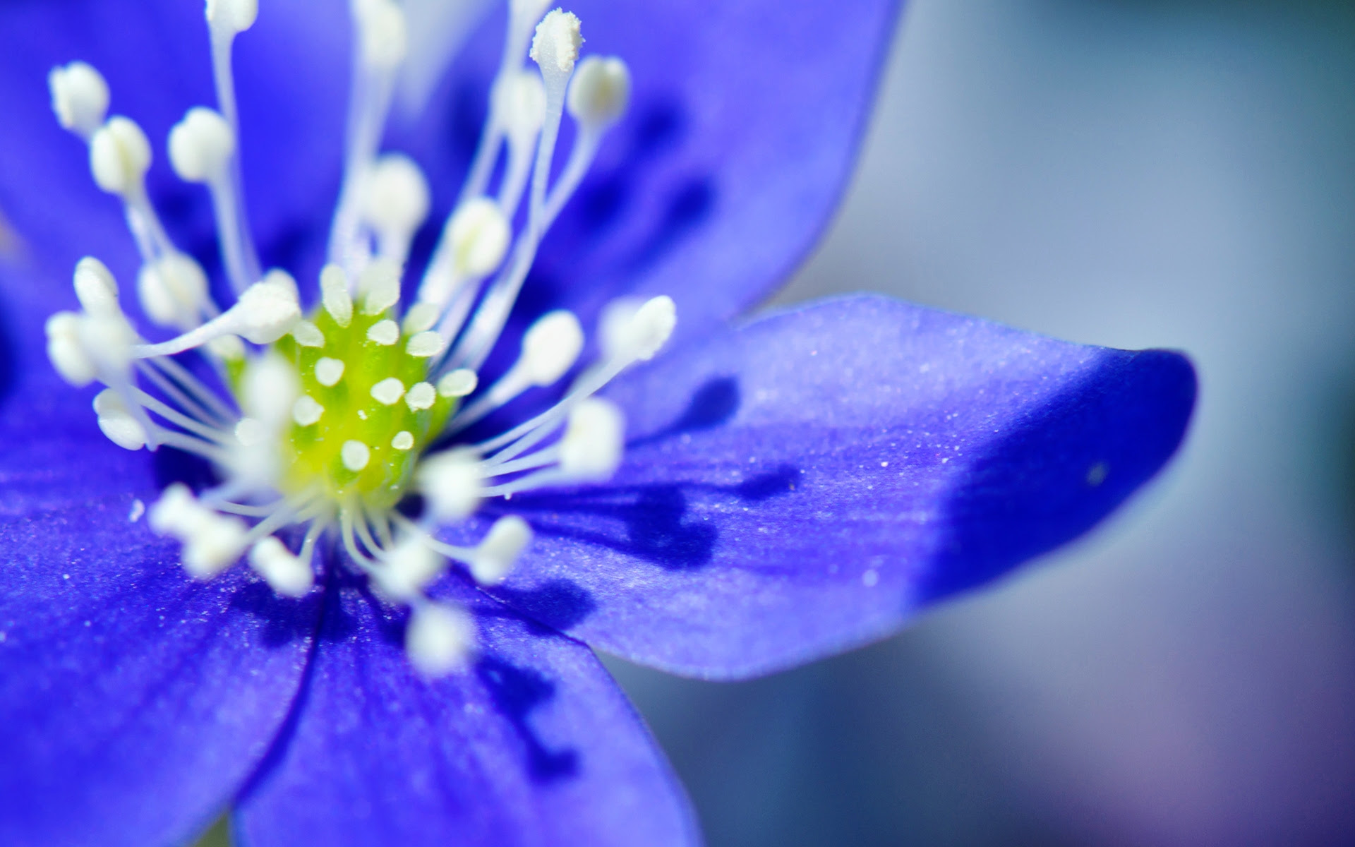 Blue Flowers Images Free Top Collection Of Different Types Of