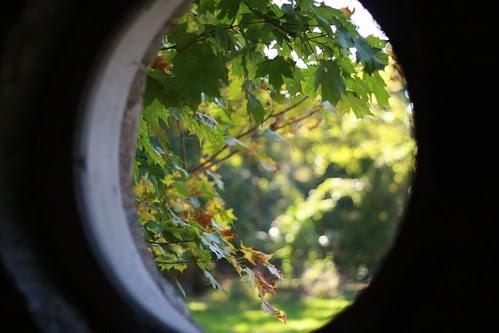 thru the window green