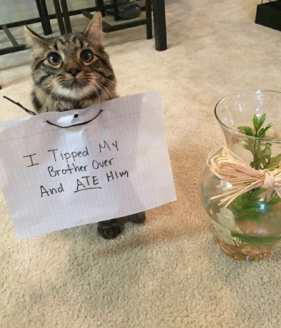 Image result for cat shaming