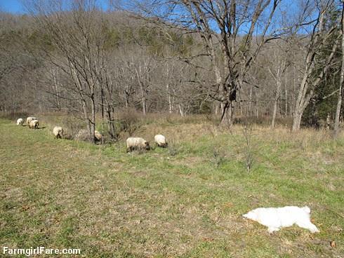Slowly defrosting in the hayfield (13) - FarmgirlFare.com