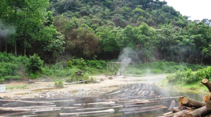 Ngay sau khi vào đầu tư, công ty Ðông Dương chặt phá cây rừng tự nhiên, rồi ngăn nước ở khu các bãi sôi lại và biến thành ao ngâm gỗ. (Hình: báo Thanh Niên)