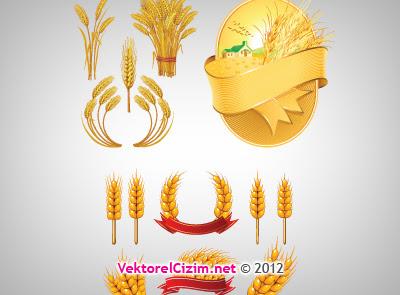 Vektörel çizim Buğday Yulaf