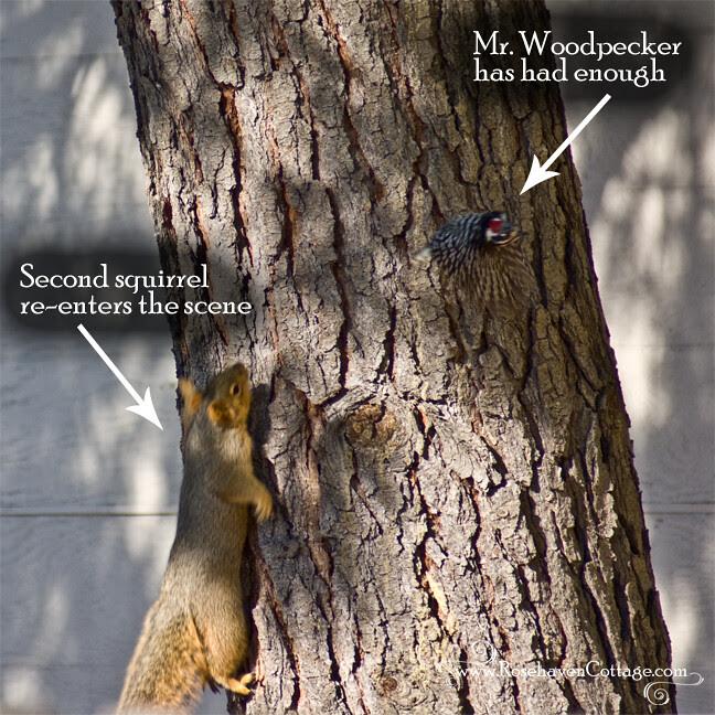 Mr. Woodpecker has had enough