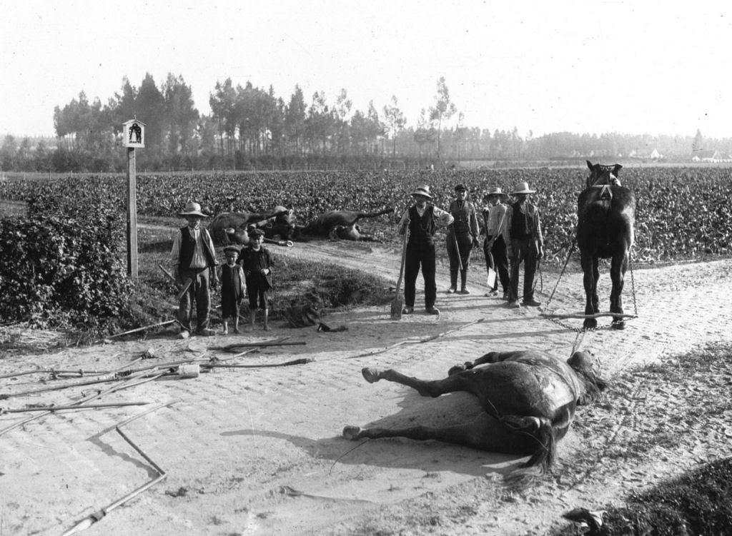 Os animais também lutaram na Primeira Guerra Mundial 35