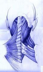 muscles studies by dibujandoarte