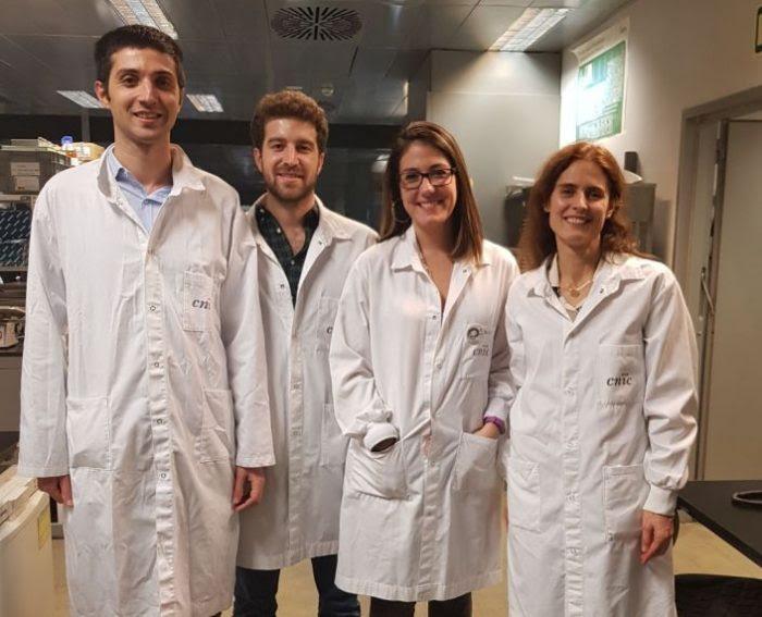 Investigadores del CNIC descubren cómo las células del pez cebra regeneran el corazón