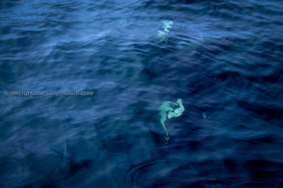 20130524-DSC_1591-orca