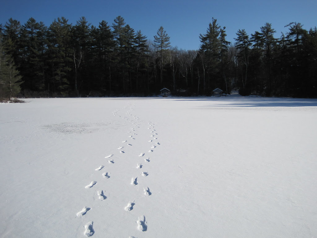 Our tracks in the snow on the lake