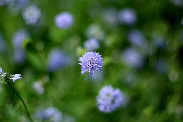 flowers, tanner springs