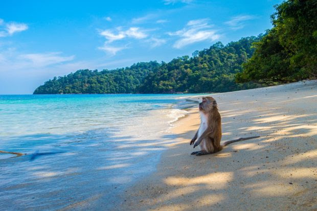 6 Fun Things to Do While On Holiday in Thailand