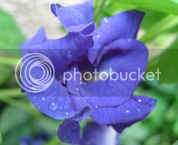 http://i251.photobucket.com/albums/gg292/anapatty2008/IMG_0519-1.jpg?t=1255117476