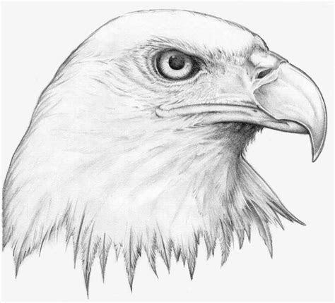 drawing   eagle   sketch  eagle  pencil draw