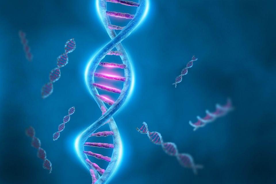 Znalezione obrazy dla zapytania Znaleziono gen odpowiedzialny za starzenie się mózgu i oka