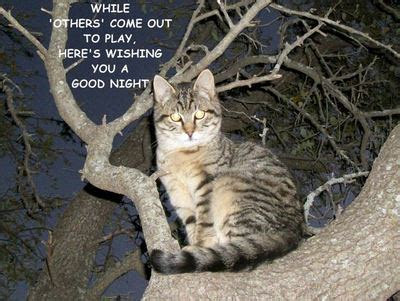 Good Night, Tree Kitty. Free Good Night eCards, Greeting