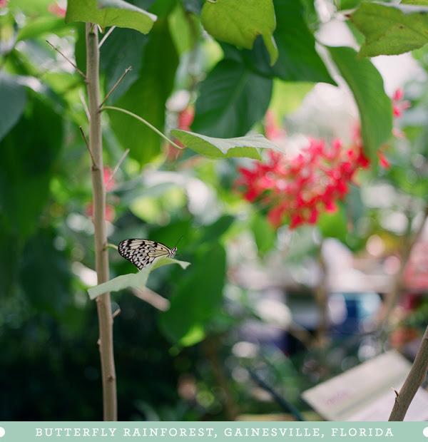 2011_1015_UFButterflies01.jpg