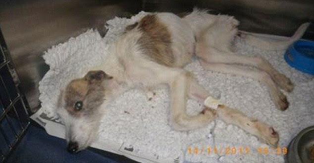 Cruel: Rueben Starving foi encontrado despejado na aldeia de Kent Hartley, perto de Sevenoaks