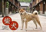 柴犬カレンダー 2013 ([カレンダー])